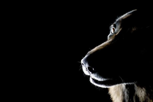 В Благовещенске собаки накинулись на ребенка: мальчик в реанимации
