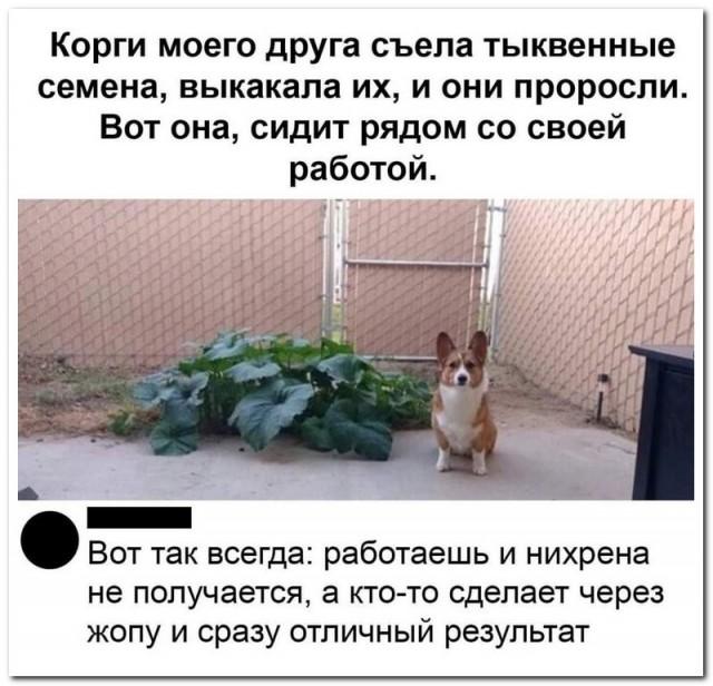 Забавные комментарии из социальных сетей 01.06.20