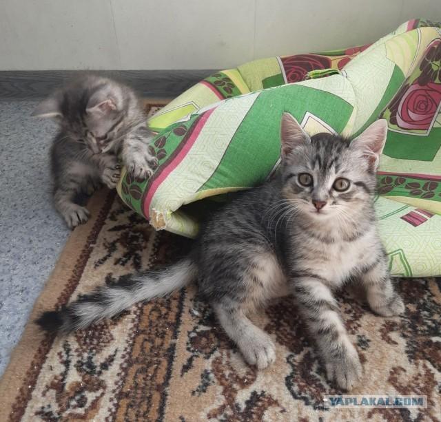 Котики-шпротики!)))