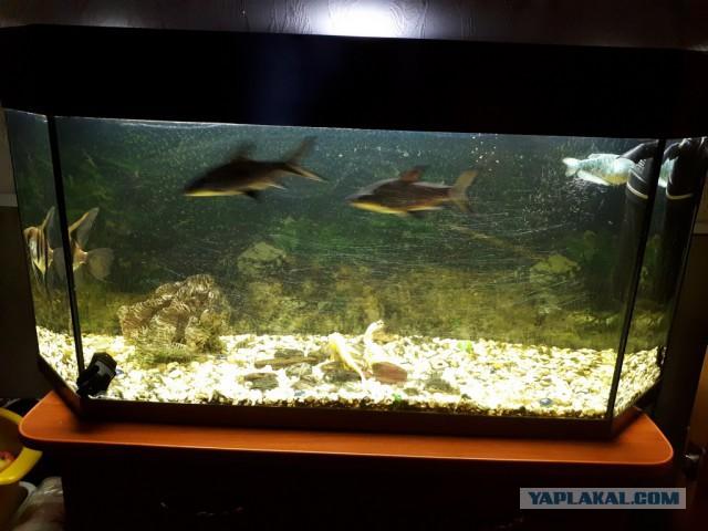 Аквариум 140 л. с рыбами. Калуга