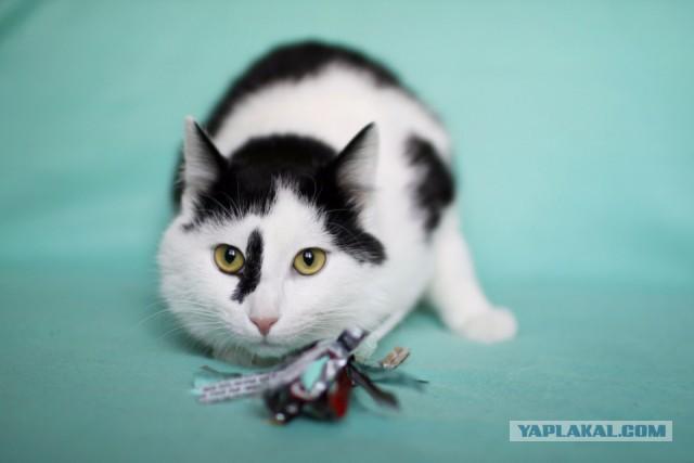 Ищу самых лучших усыновителей для кота!