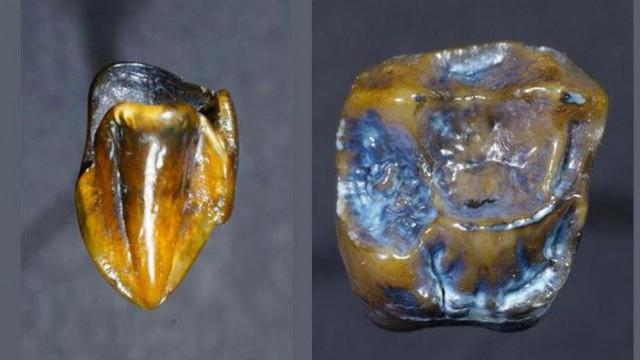 Найденные в Германии зубы, которым 9,7млн лет, могут переписать историю человечества