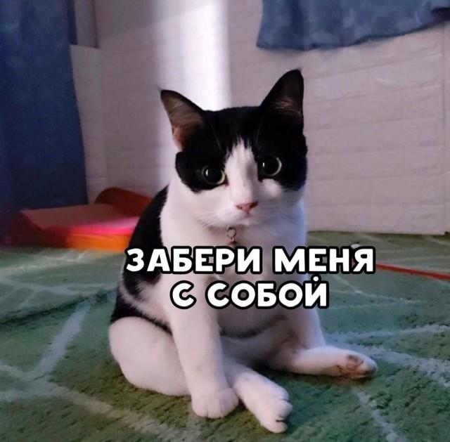 Пропел