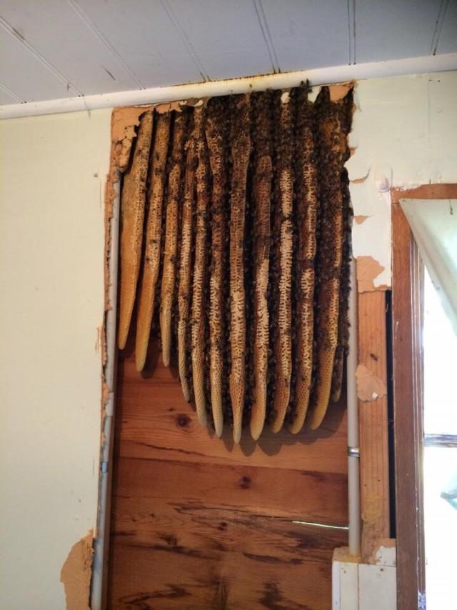 Делали ремонт в старом доме. Нашли небольшой улей