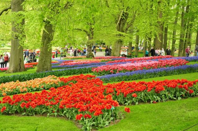 Парк тюльпанов «Кёкенхоф». Поездка за впечатлениями.