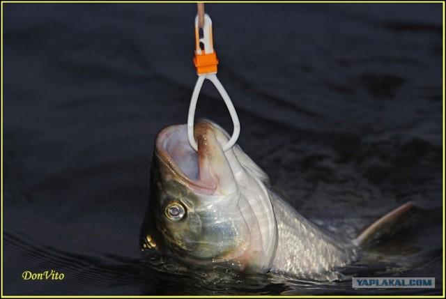 рыбалка изготовление куканов