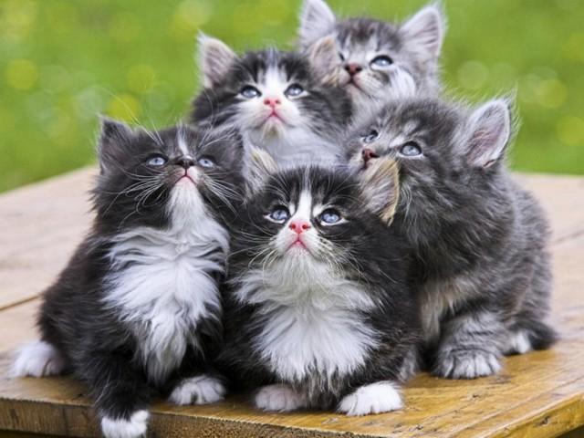 19 шикарных кошек, которые стоят целое состояние