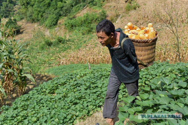 Фермер-инвалид без рук успешно ведет хозяйство