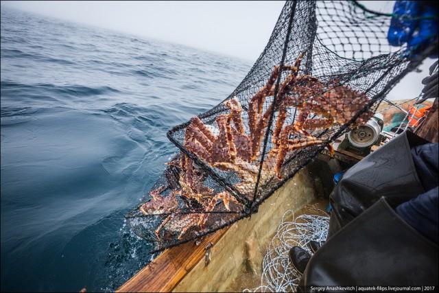 японский краб рыбалка