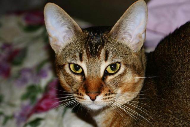 Кот Костя ищет хозяина!