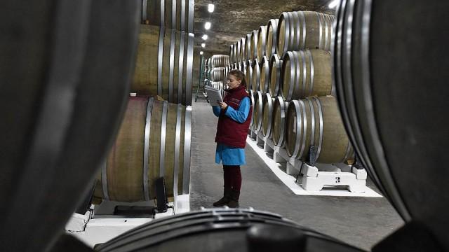 Импортёры вина пригрозили уходом 80% компаний из-за закона Минфина о льготах