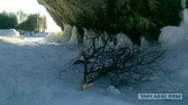 Бурятский шаман проклял хулиганов, срубивших священную березу на Байкале