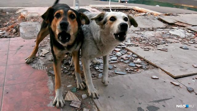 Свора собак разорвала кошек в Октябрьском районе