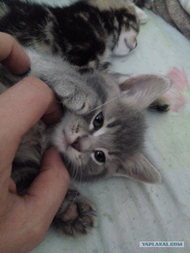 Отдам в добре руки котят