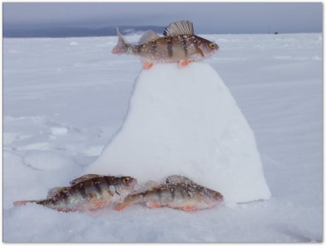 Диалоги о рыбалке