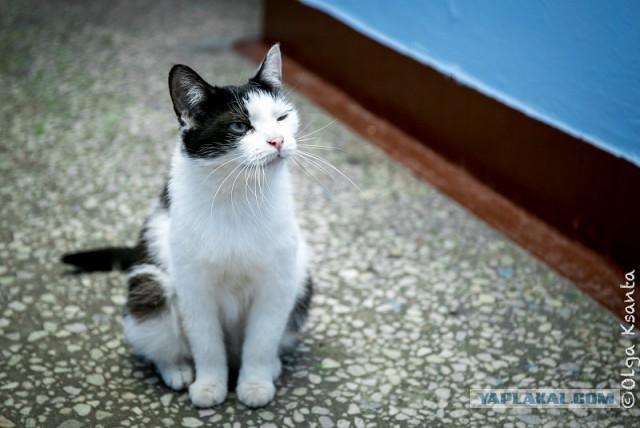 Настоящий подарок неокошаченным. Ищу доброго хозяина для доброй кошки.