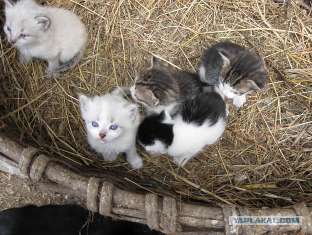 Кому котят полные карманы !