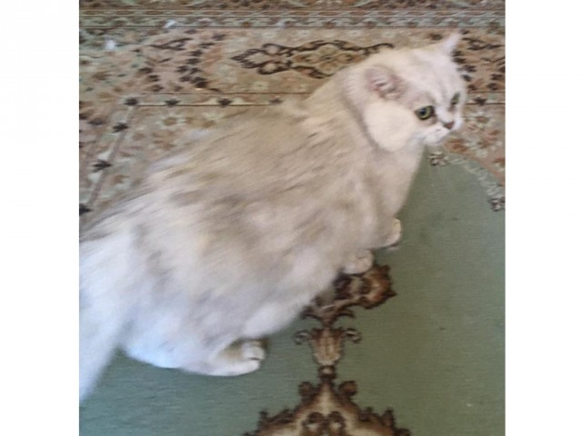 ТУЛА! Кот ищет новых хозяев, иначе - старые усыпят!