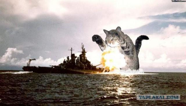 Ударно-истребительный кот палубной военно-морской авиации Северного Флота.