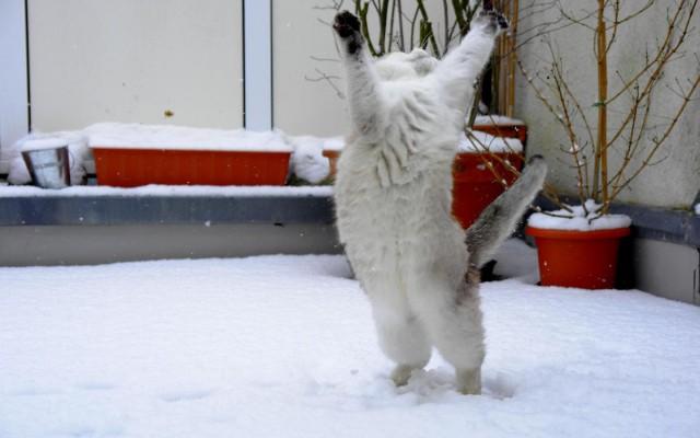 ловить снежок прикол