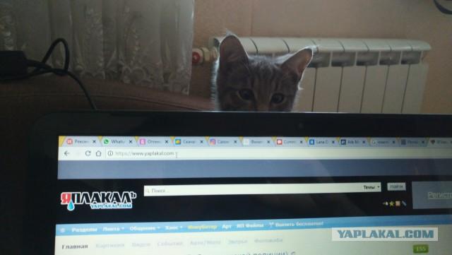 Помогите найти дом коту