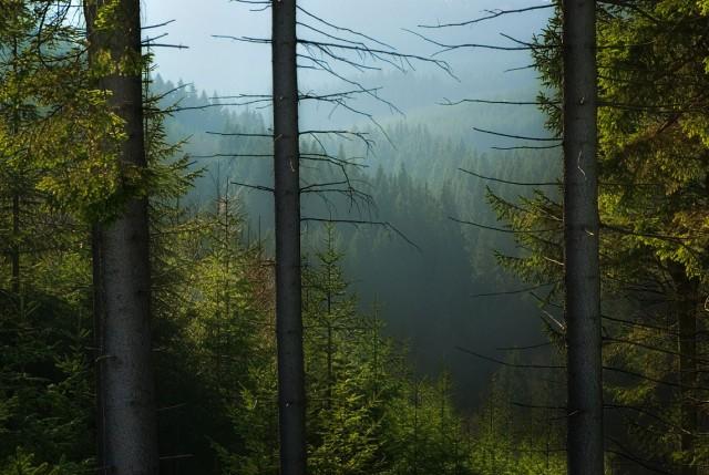 Немножко пейзажей