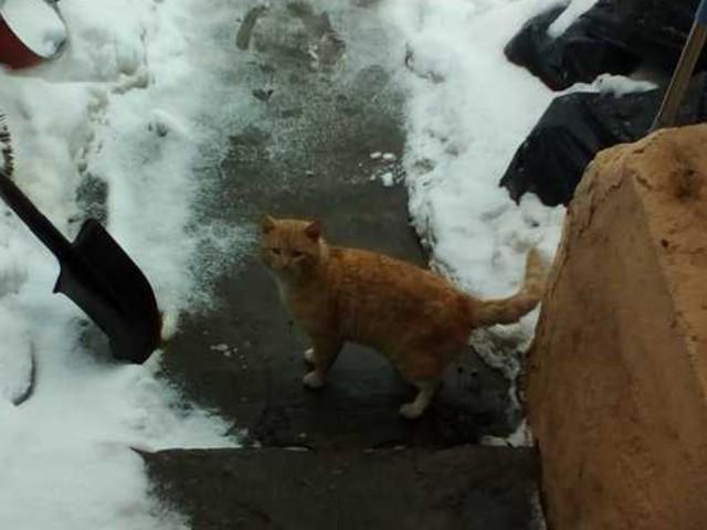 Помогите безхвостому котику найти дом!