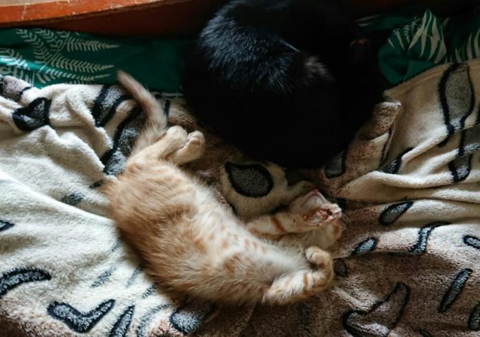 Отдается кот