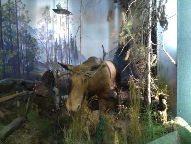Диагноз: Срочно на Байкал