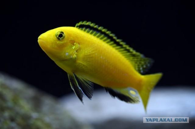 Рыбки аквариумные надо кому?