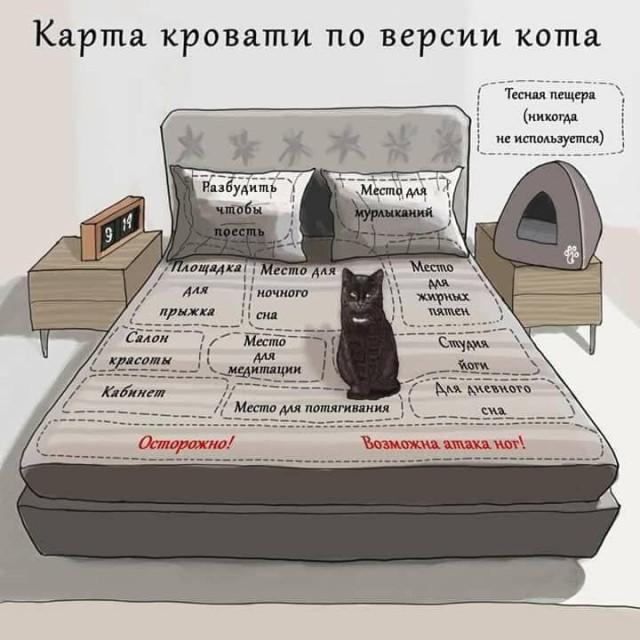"""""""Знай свое место, человек!"""" или карта кровати по версии кота"""