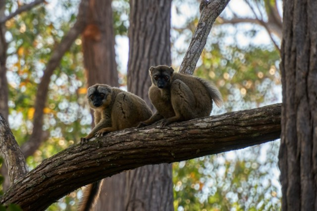 Мадагаскар — путешествие по стране лемуров и баобабов
