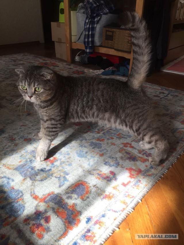 Кошечка Мальвина ищет новый дом