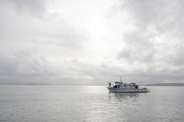 Как добывают гуидак - самых крупных моллюсков