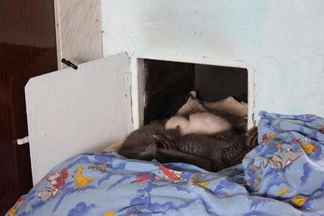 Котята в духовке