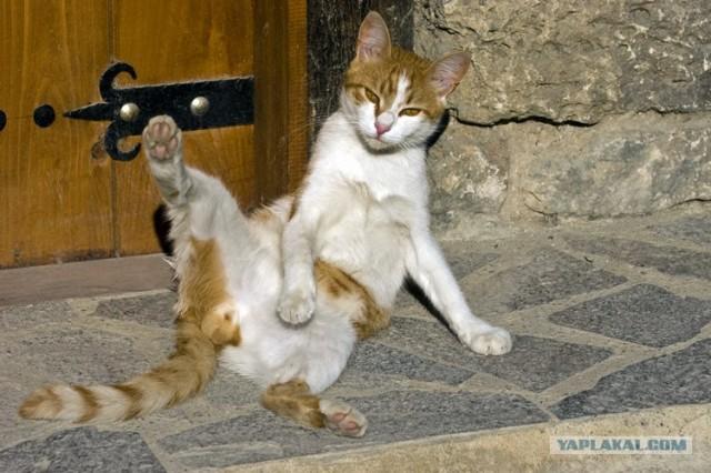 Если кот метит на дверь что делать