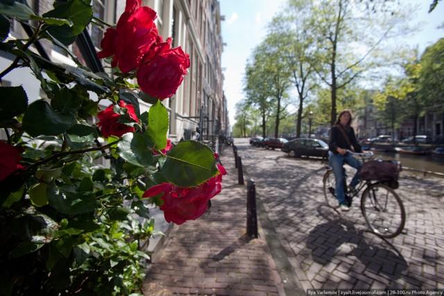 Какая радость, этот ваш Амстердам!