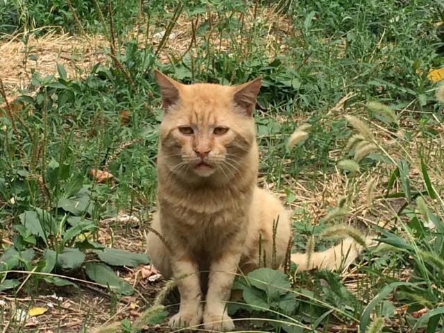 Встретил унылого кота