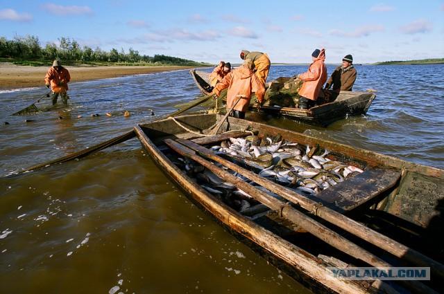передачи о рыбалке на севере