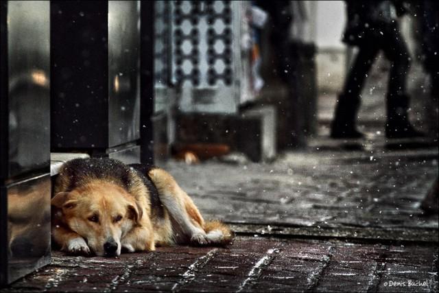 На Урале за одну ночь убили десятки собак