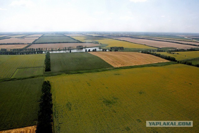На Кубани собрали рекордные 9,8 миллиона тонн зерн