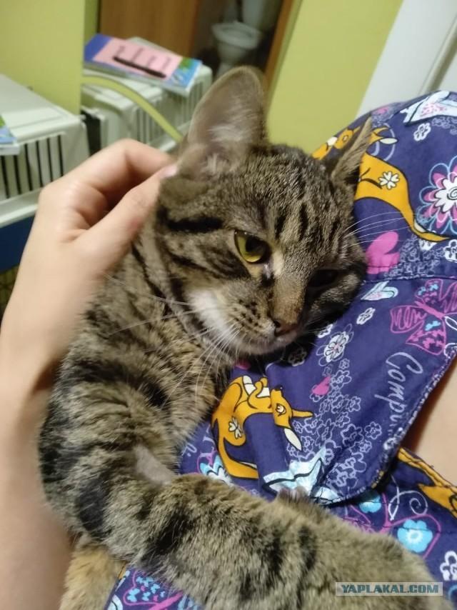 Приютите котика на пару месяцев, пожалуйста!