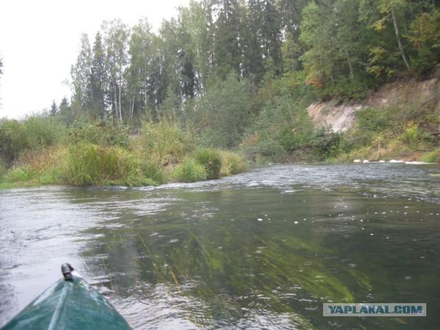 Сплав: река Мера, байдарка, женщина, собака.