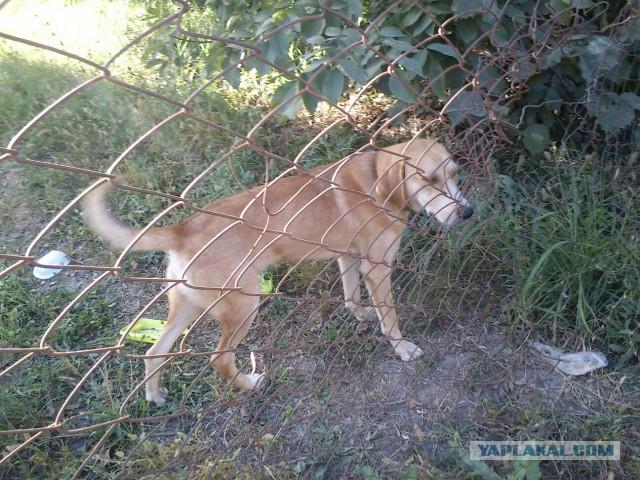 Спасти рядового собакена