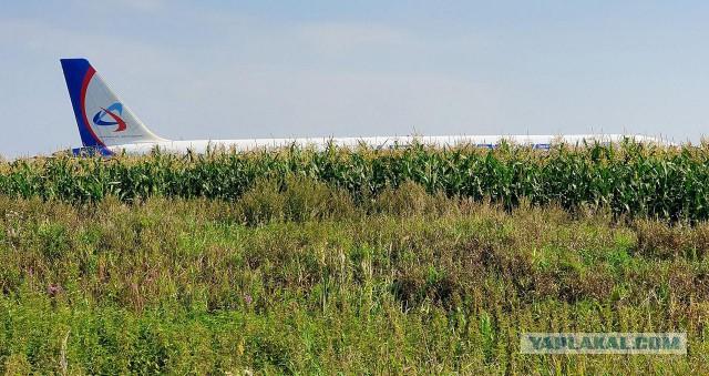 Владелец поля под Москвой пожаловался на убытки от посадки самолета