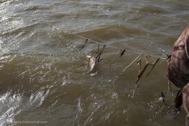 где весной ловить рыбу в астрахани в