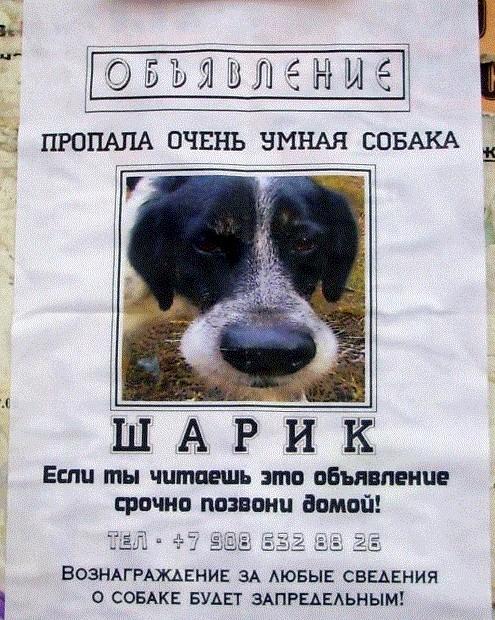Собака пропала