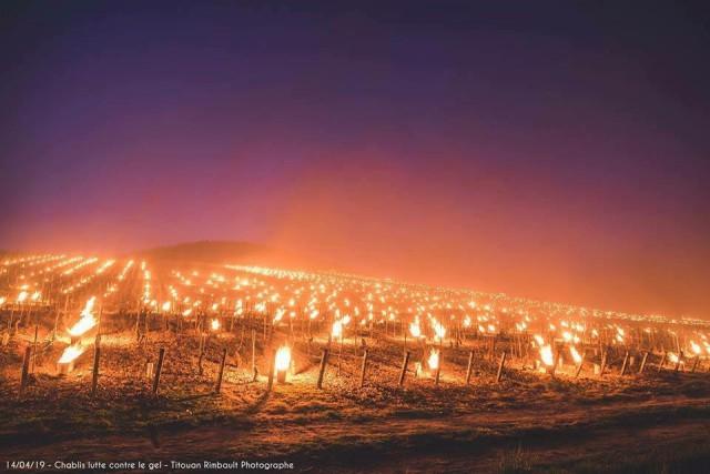 Костры на французских виноградниках