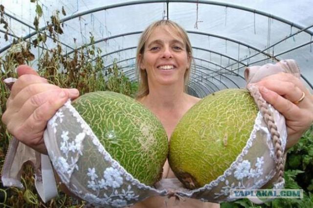 грудь величиной с арбуз фото