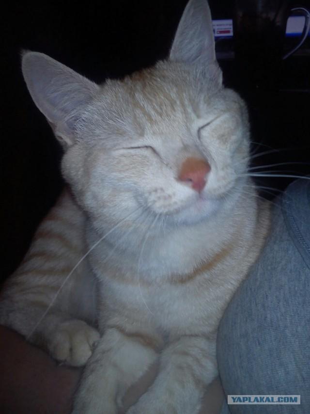Отдам рыжего Котенка (8 месяцев)